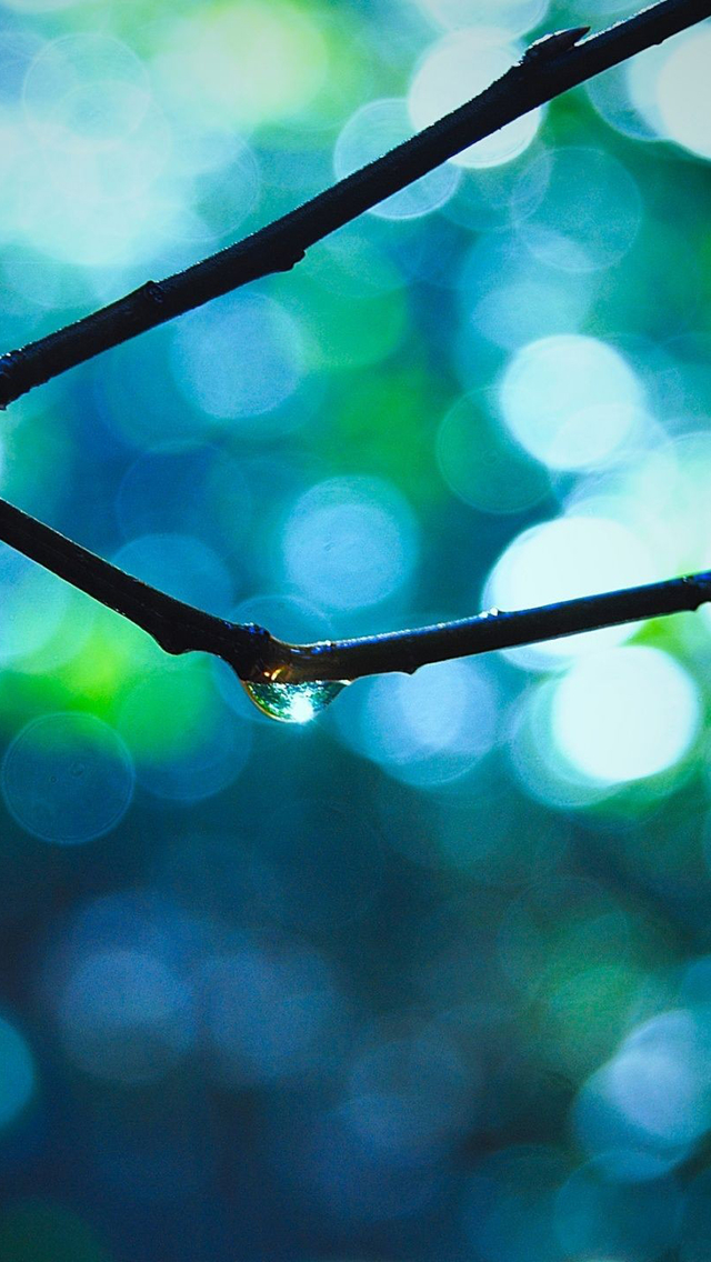 Branch With Raindrops